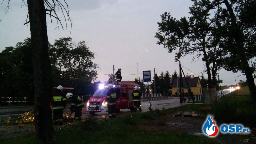 Złamane drzewo. OSP Ochotnicza Straż Pożarna