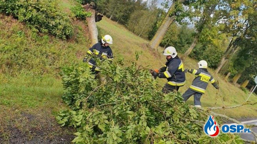 Powalone Drzewo Silny Wiatr DK20 OSP Ochotnicza Straż Pożarna