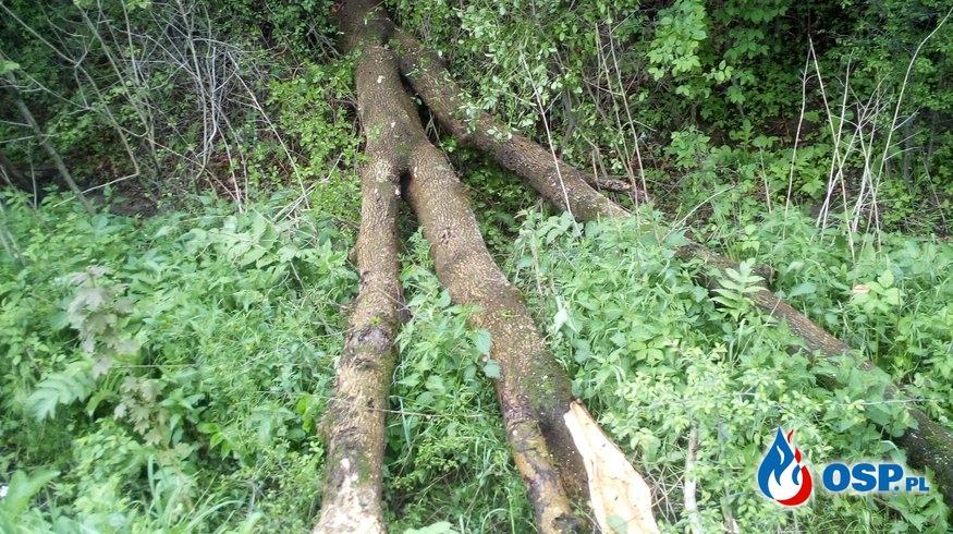 Powalone drzewo!! OSP Ochotnicza Straż Pożarna