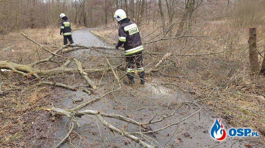 Pochylone drzewo nad drogą gminną OSP Ochotnicza Straż Pożarna