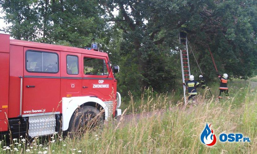 [22/2016] Złamana korona drzewa OSP Ochotnicza Straż Pożarna