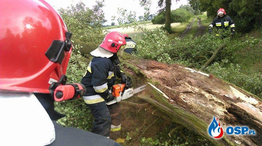 Powalone drzewa w Chłapowie i Borzejewie OSP Ochotnicza Straż Pożarna
