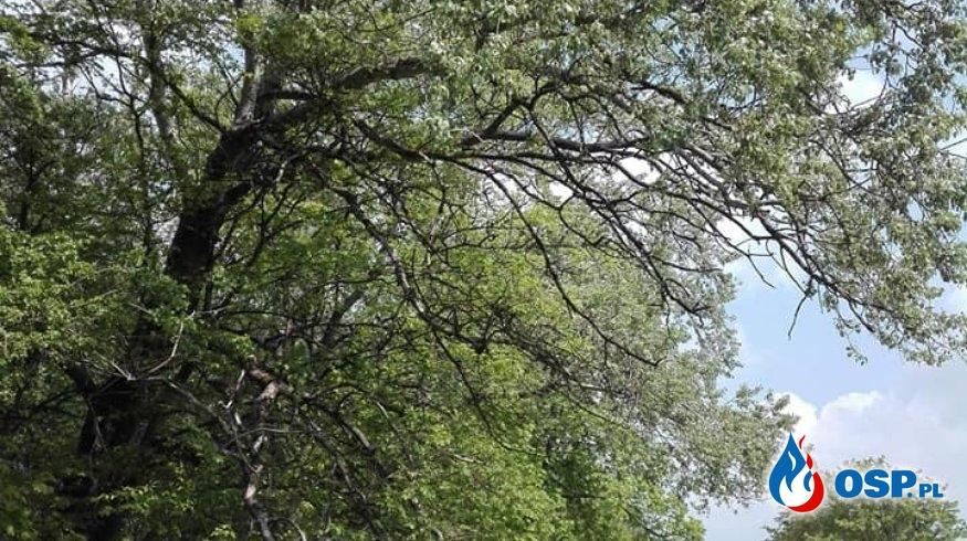 Przewrócone drzewo w miejscowości Makówiec! OSP Ochotnicza Straż Pożarna