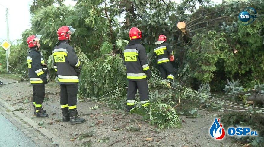 W Koninie drzewo przewróciło się na linię energetyczną i połamało słupy [WIDEO] OSP Ochotnicza Straż Pożarna