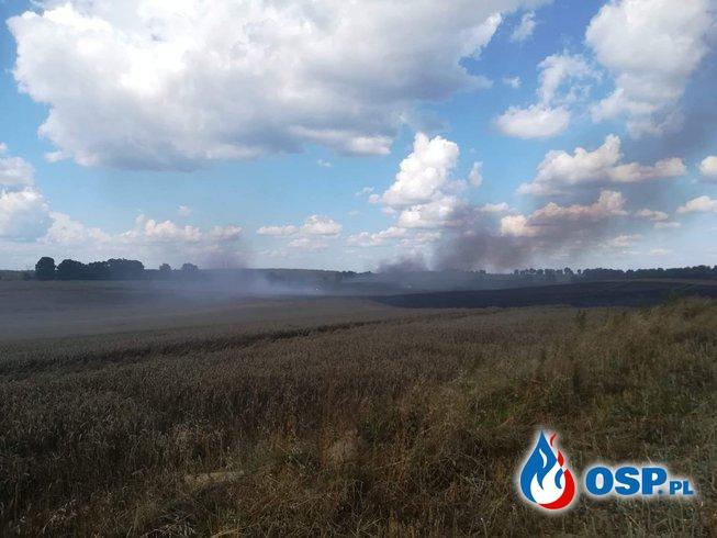Największy pożar w powiecie spłonęło 50 hektarów  OSP Ochotnicza Straż Pożarna