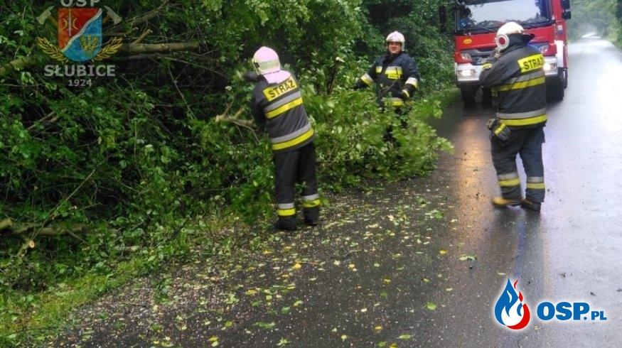 Drzewo upadło na drogę OSP Ochotnicza Straż Pożarna