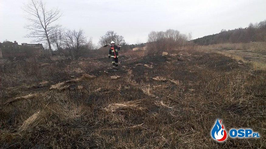 Pierwszy pożar traw w miejscowości - Pięty OSP Ochotnicza Straż Pożarna