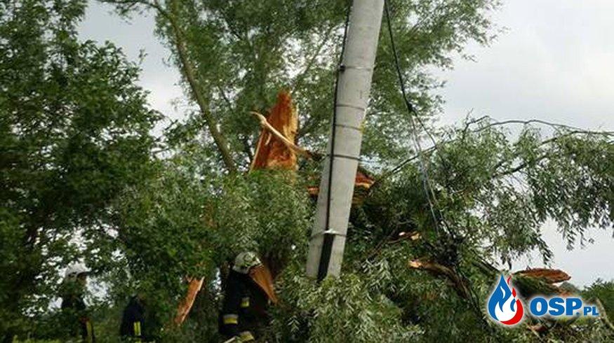 5 powalonych drzew na drodze gminnej w Zatoni Dolnej OSP Ochotnicza Straż Pożarna
