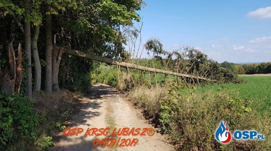 Powalone drzewo oraz zwisający konar OSP Ochotnicza Straż Pożarna