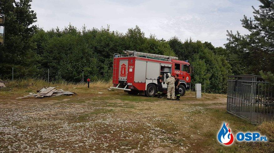 Owady błonkoskrzydłe w budynku mieszkalnym OSP Ochotnicza Straż Pożarna