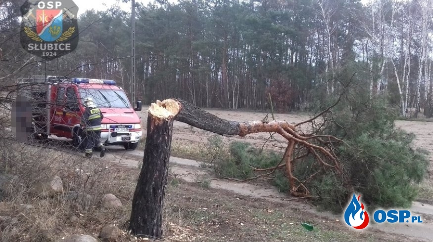 Drzewo przewróciło się na drogę OSP Ochotnicza Straż Pożarna