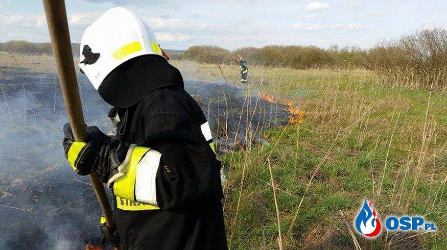 Pożar nieużytków! OSP Ochotnicza Straż Pożarna