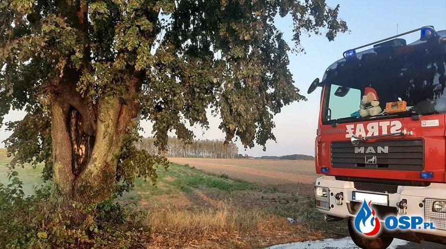 Pożar drzewa OSP Ochotnicza Straż Pożarna