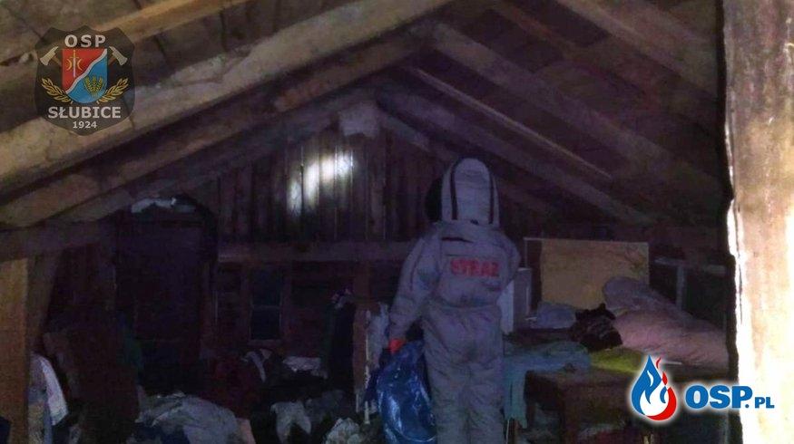 Groźne szerszenie w budynku mieszkalnym OSP Ochotnicza Straż Pożarna