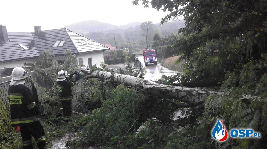 Powalone drzewa - ul. Harcerska w Wygiełzowie OSP Ochotnicza Straż Pożarna