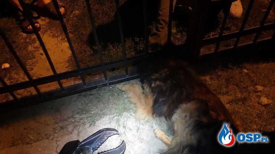 Kleszczewo - uwięziony pies OSP Ochotnicza Straż Pożarna