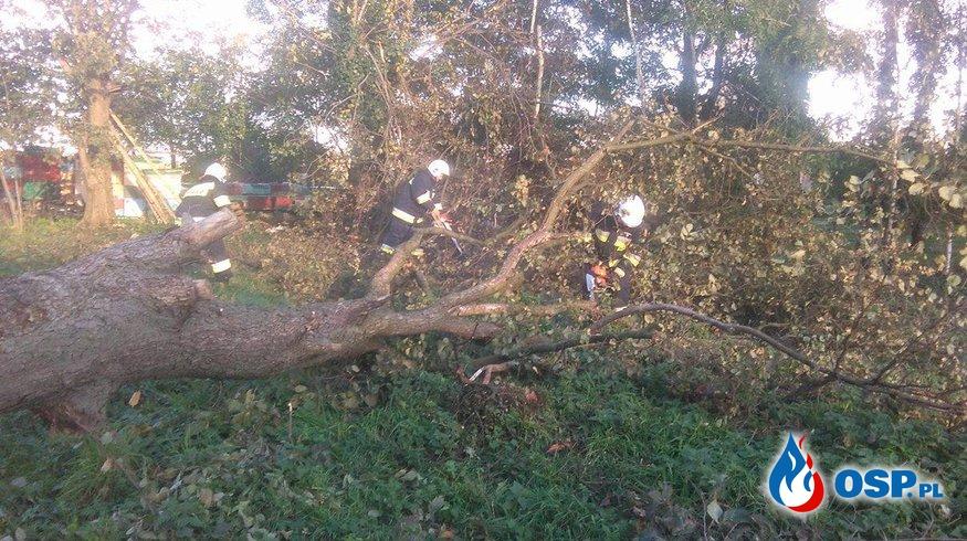 Powalone drzewo na posesji OSP Ochotnicza Straż Pożarna