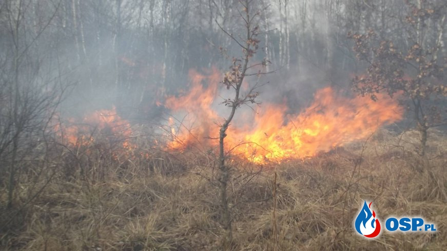 Zdarzenie 7/2017 POŻAR OSP Ochotnicza Straż Pożarna