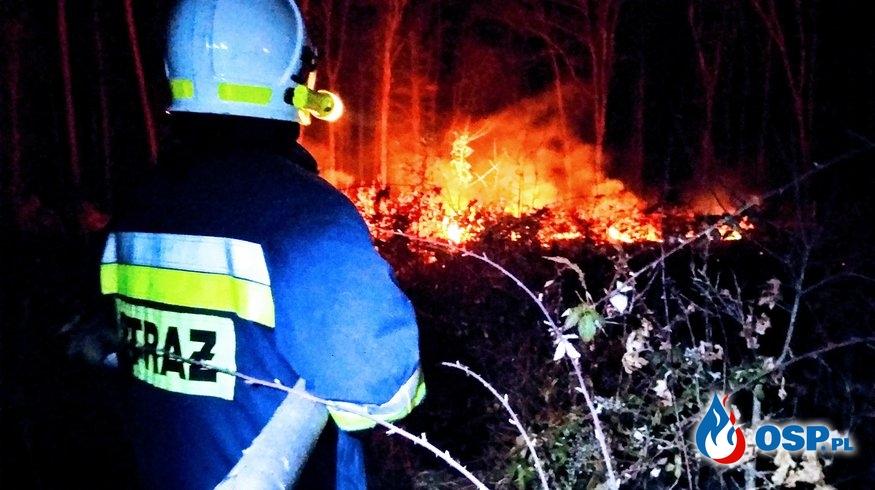 Pożar lasu między Bielskiem a Ostrowem OSP Ochotnicza Straż Pożarna