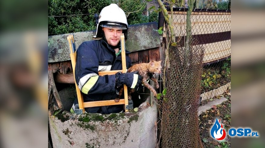 Kot wpadł do studni i utknął, wydobyli go strażacy z Kazimierza OSP Ochotnicza Straż Pożarna