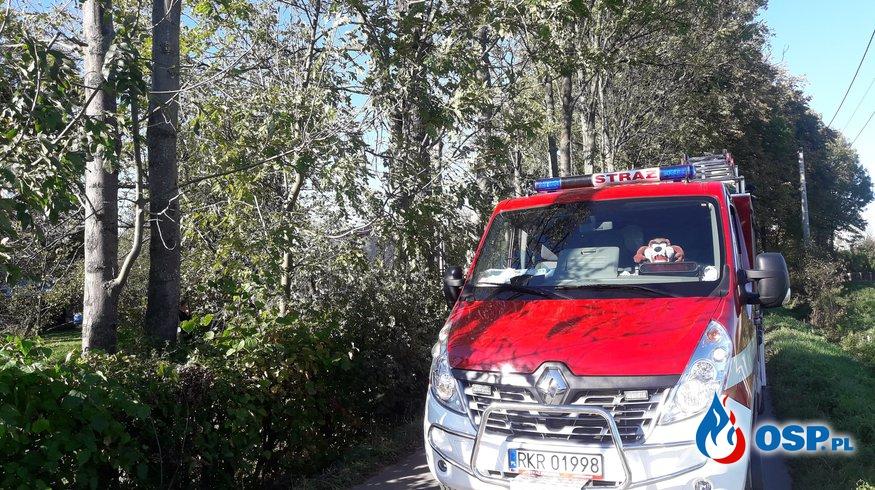 Drzewo przechylone nad drogą OSP Ochotnicza Straż Pożarna