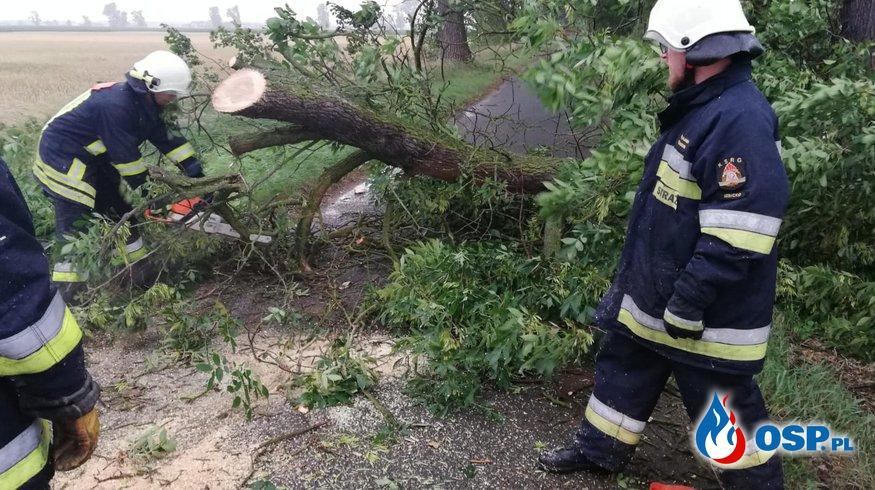 Złamany konar drzewa zablokował drogę OSP Ochotnicza Straż Pożarna