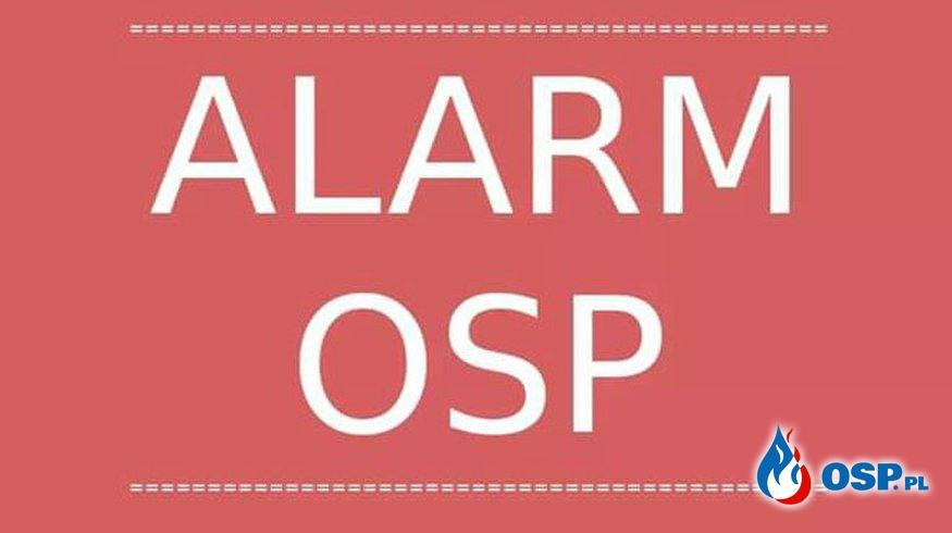 Pożar gałęzi. OSP Ochotnicza Straż Pożarna