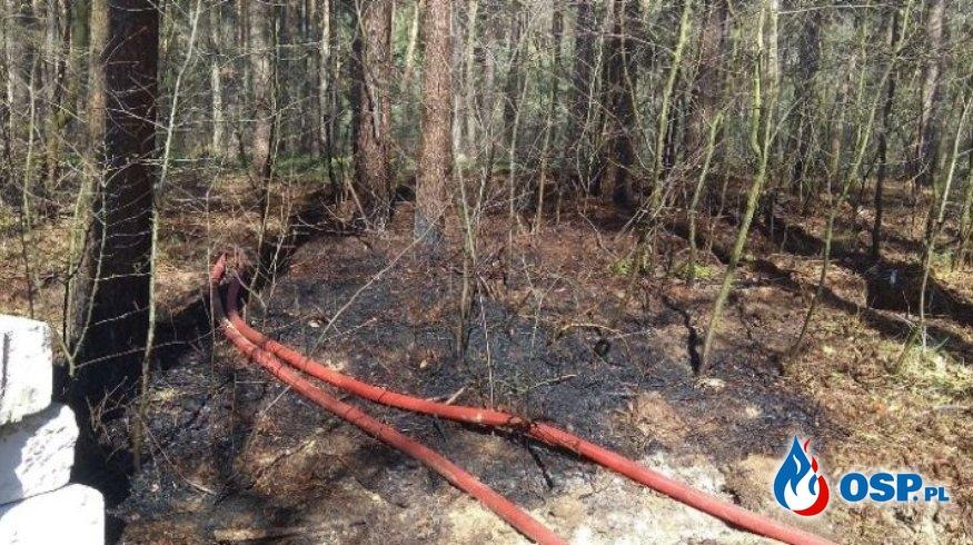 Chojno – pożar poszycia leśnego OSP Ochotnicza Straż Pożarna
