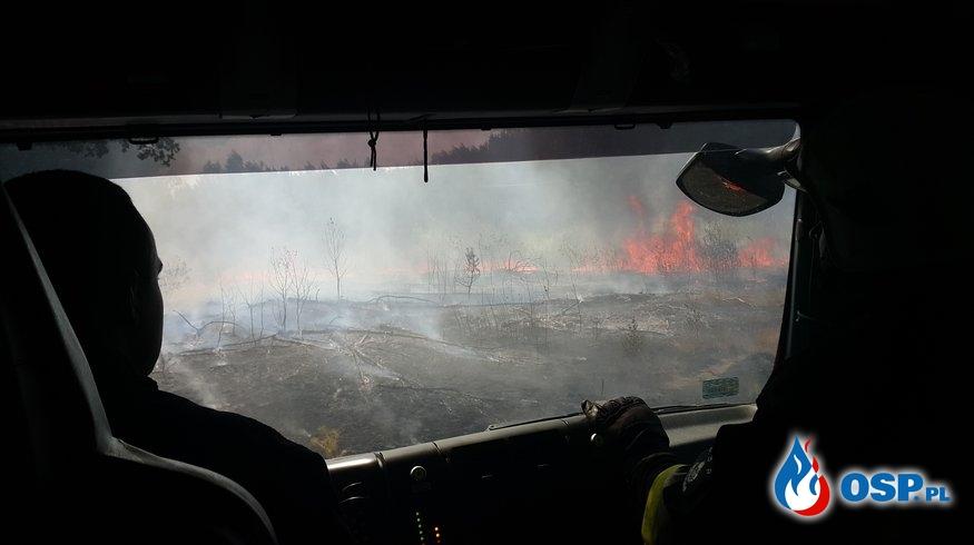3 wyjazdy do pożaru jednego dnia. Groźny pożar lasu w miejscowości Zabrnie. OSP Ochotnicza Straż Pożarna