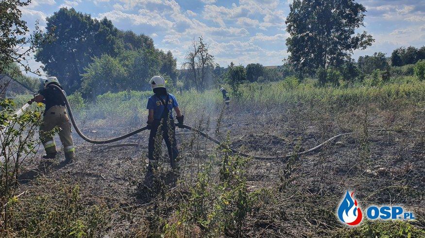 154/2020 Pożar trzcin w Mętnie OSP Ochotnicza Straż Pożarna