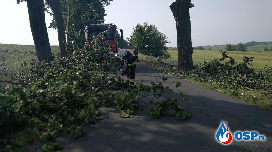 Kolejne niebezpiecznie zwisające gałęzie. OSP Ochotnicza Straż Pożarna