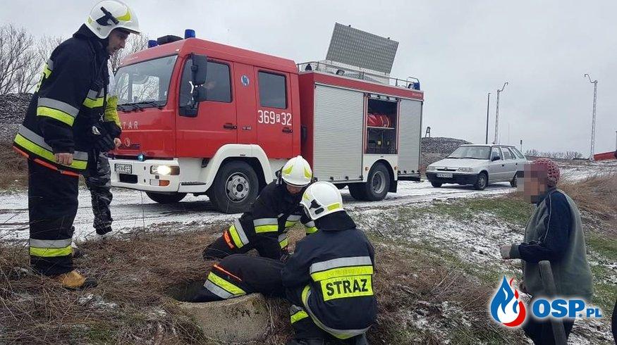 Strażacy uratowali psa, który utknął w studzience OSP Ochotnicza Straż Pożarna