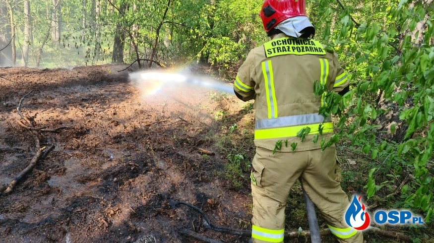 87/2020 Pożar lasu w okolicy Granicznej OSP Ochotnicza Straż Pożarna