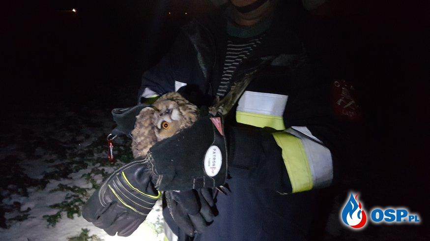 Strażacy ratowali sowę OSP Ochotnicza Straż Pożarna