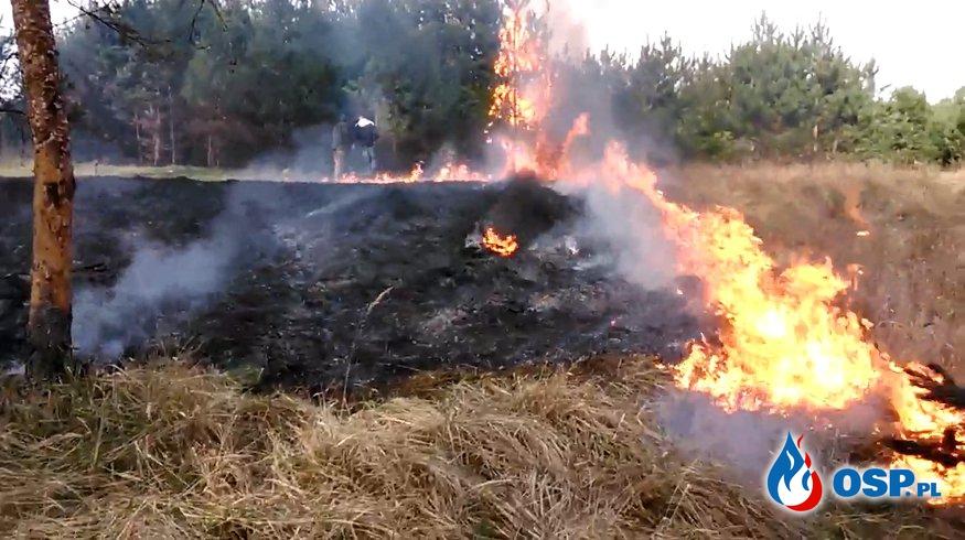Pożar lasu Brzózki OSP Ochotnicza Straż Pożarna