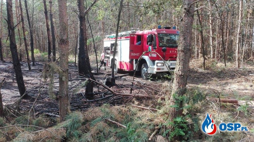 Pożar ścioły leśnej OSP Ochotnicza Straż Pożarna
