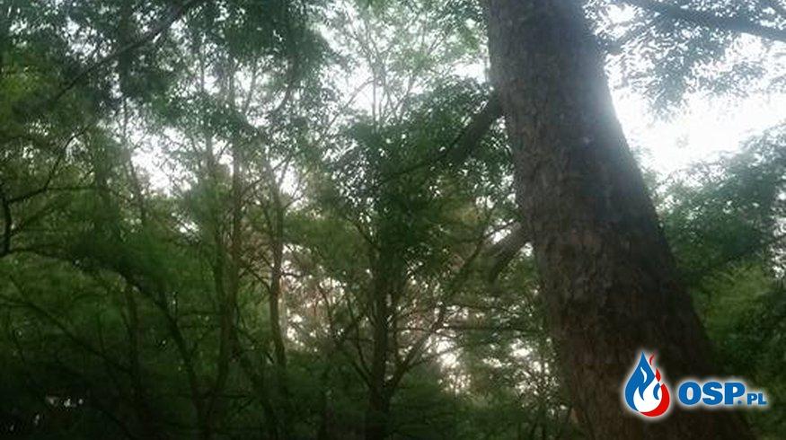 Pochylone Drzewo nad drogą. !! OSP Ochotnicza Straż Pożarna