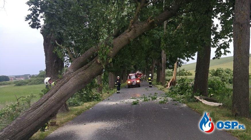 Kilkanaście powalonych drzew w okolicy Dolska OSP Ochotnicza Straż Pożarna