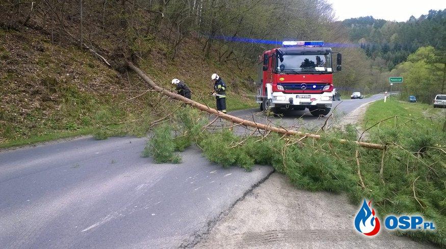Wyjazdy do powalonych drzew OSP Ochotnicza Straż Pożarna