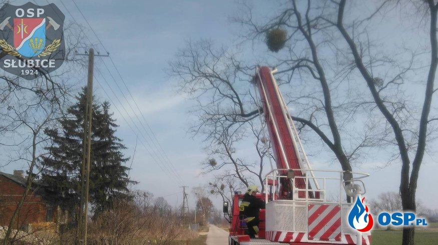 Pomogliśmy przy usunięciu gałęzi OSP Ochotnicza Straż Pożarna