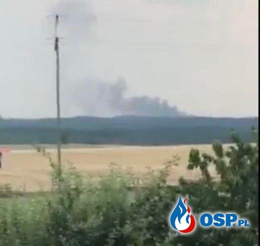 Pożar pola jęczmienia i lasu OSP Ochotnicza Straż Pożarna