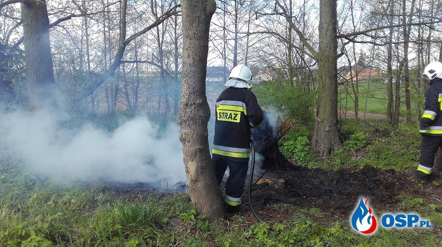 22.04.16 Pożar drzewa  OSP Ochotnicza Straż Pożarna