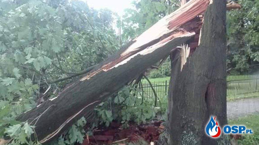 10,08,2017 przewrócone drzewo  OSP Ochotnicza Straż Pożarna