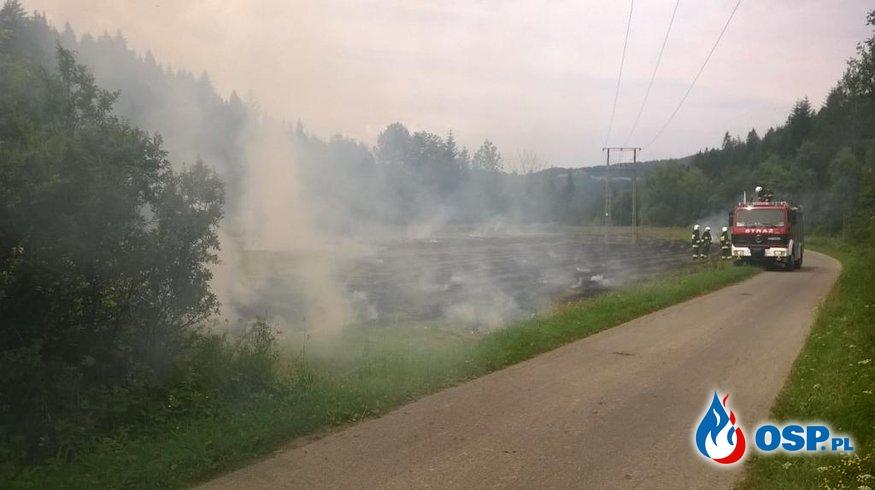 Płonąca wysuszona trawa! OSP Ochotnicza Straż Pożarna