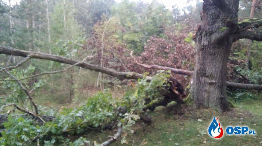 Drzewo na drodze!  OSP Ochotnicza Straż Pożarna
