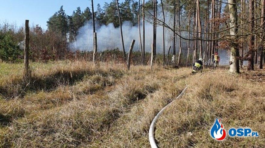 Pożar młodnika OSP Ochotnicza Straż Pożarna