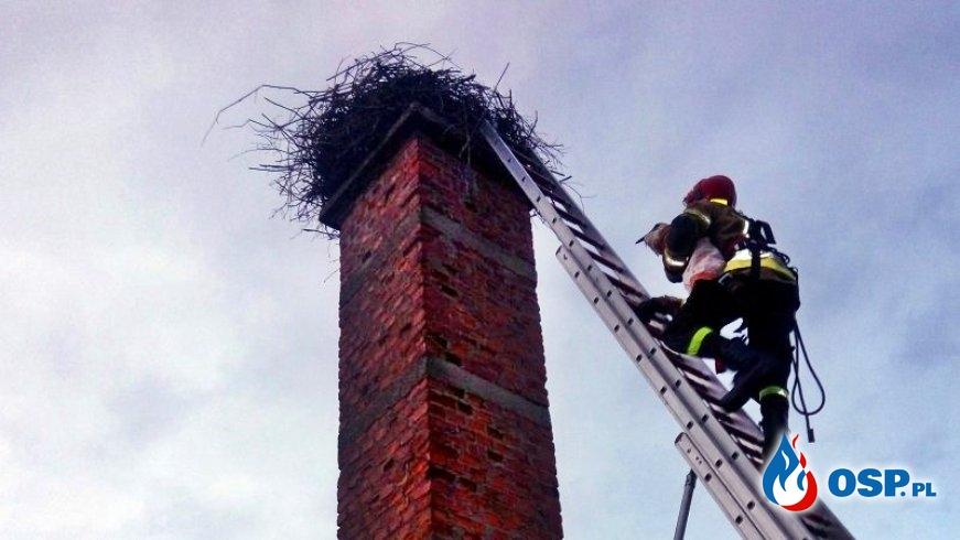 Młody bocian wypadł z gniazda. Na ratunek ruszyli strażacy. OSP Ochotnicza Straż Pożarna