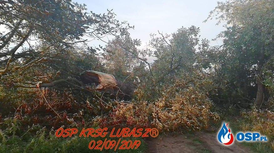 Owady błonkoskrzydłe i powalone drzewo OSP Ochotnicza Straż Pożarna
