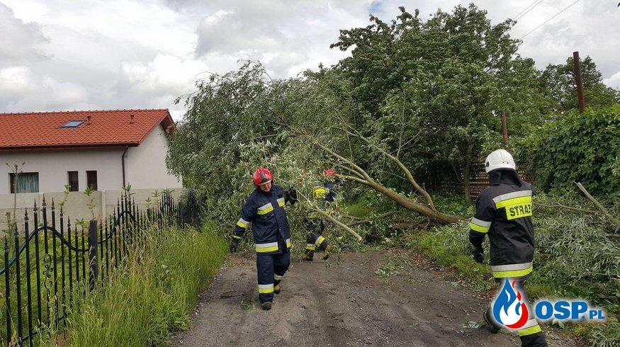 Silna wichura i powalone drzewo OSP Ochotnicza Straż Pożarna