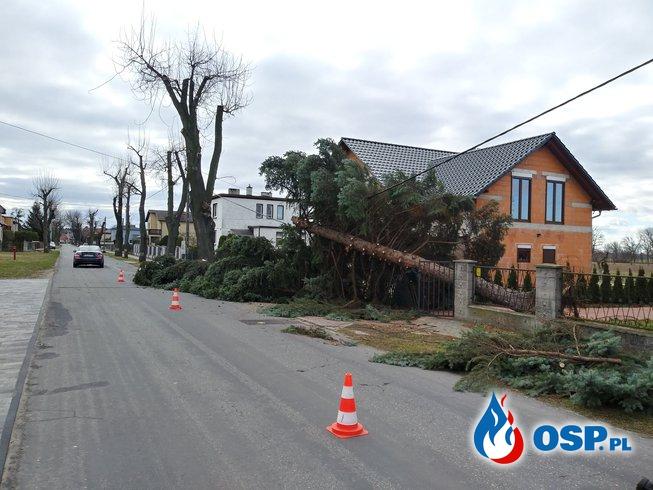 Usuwanie skutków wichury przez OSP Brzeźce OSP Ochotnicza Straż Pożarna